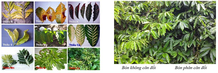 phan-bon-vi-luong-horti-ponic-kimnonggoldstar