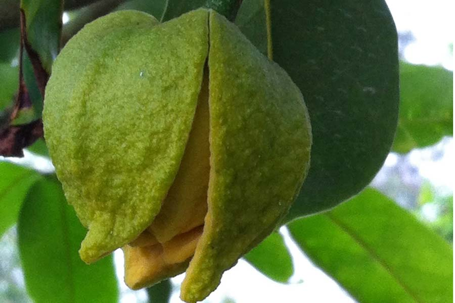 thuốc chông rụng trái horti boron