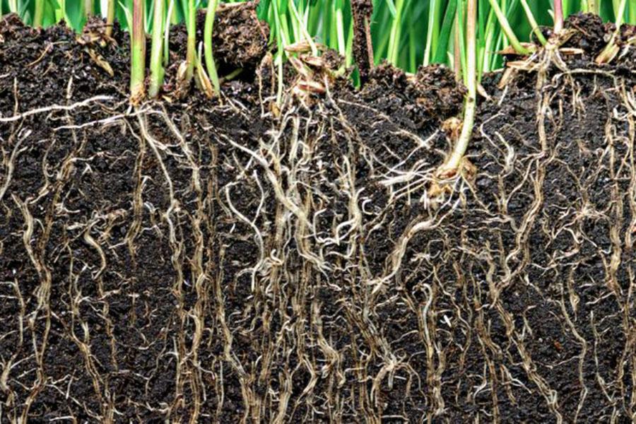 cung cấp dinh dưỡng cây trồng