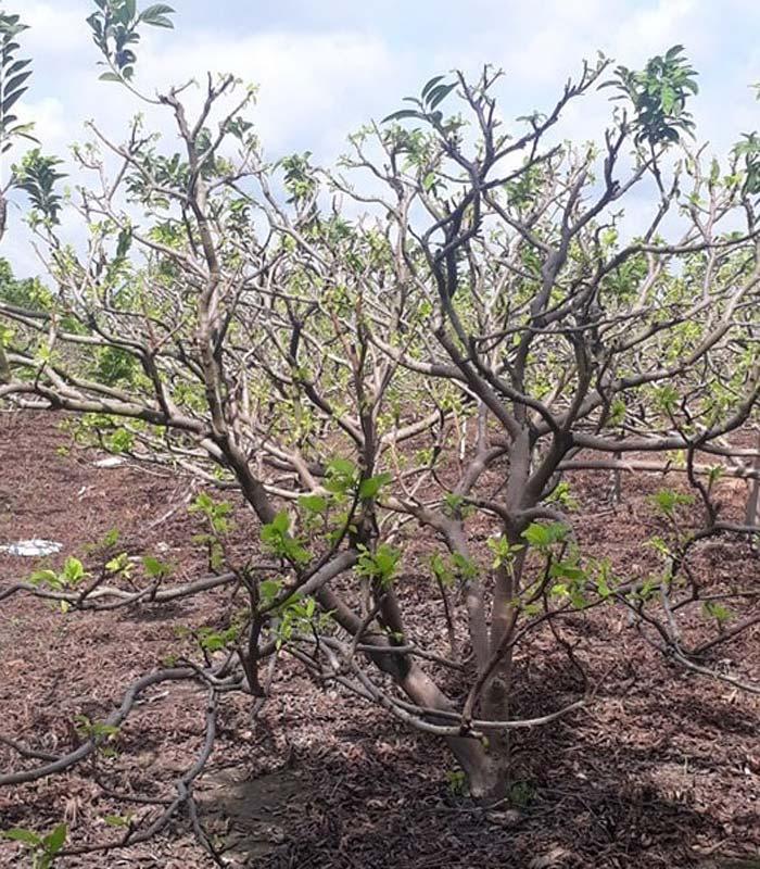 super humic phục hồi cây