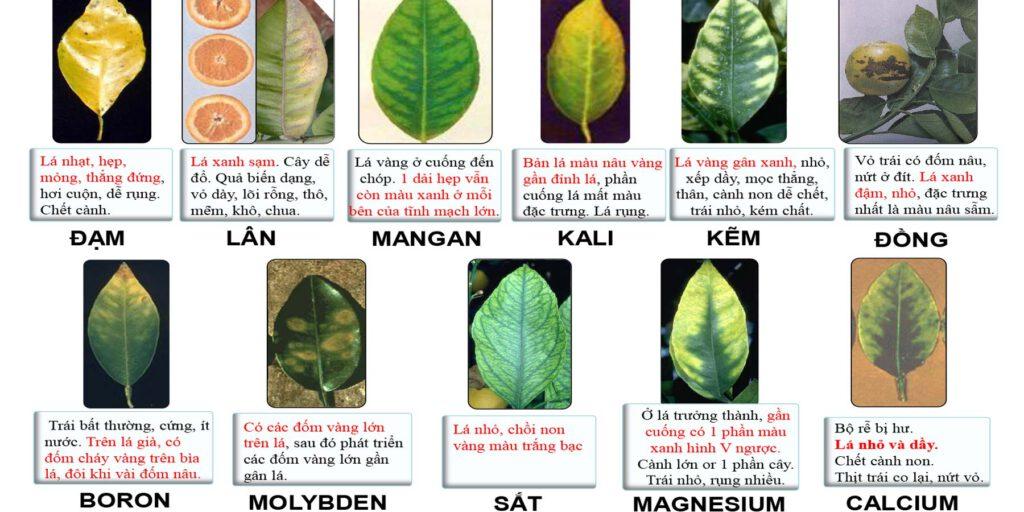 thiếu hụt dinh dưỡng cây trồng