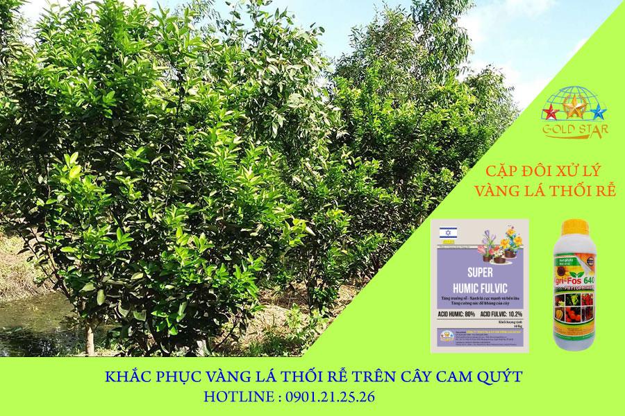 vang-la-thoi-re-tren-cam-quyt-kim-nong-baner01