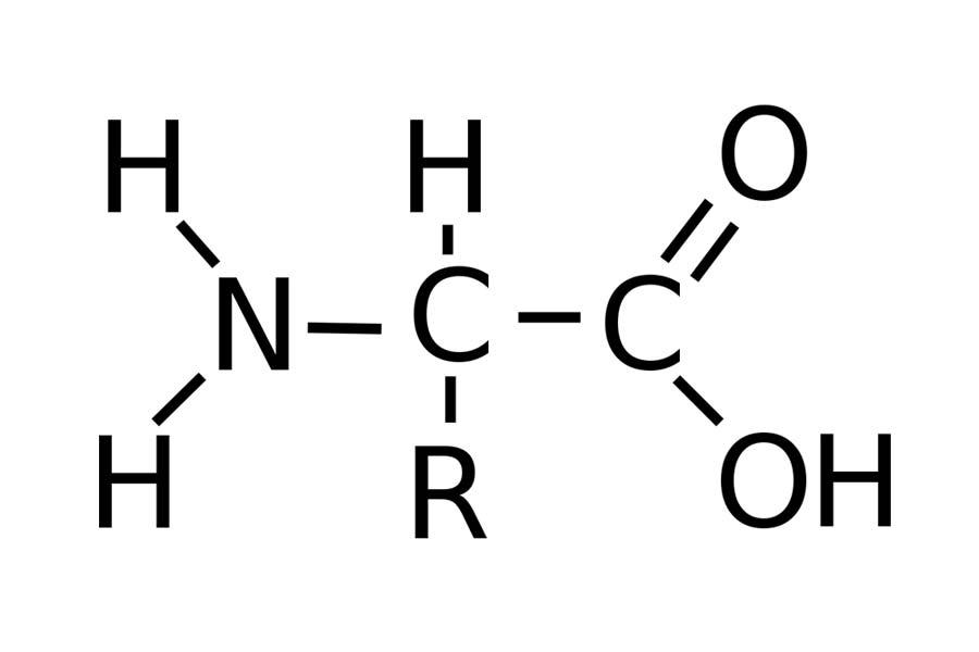 phân bón lá amino của pháp