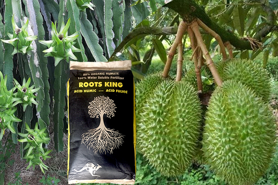 thuốc kích rễ roots king